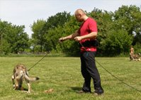 szkolenia grup psów
